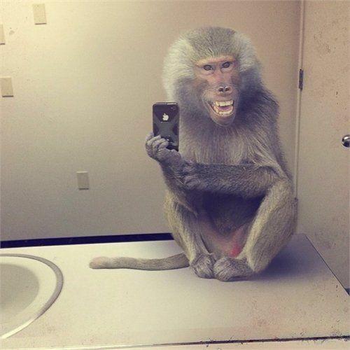 Affe macht iPhone-Selfie