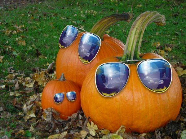Kürbisse mit Sonnenbrille